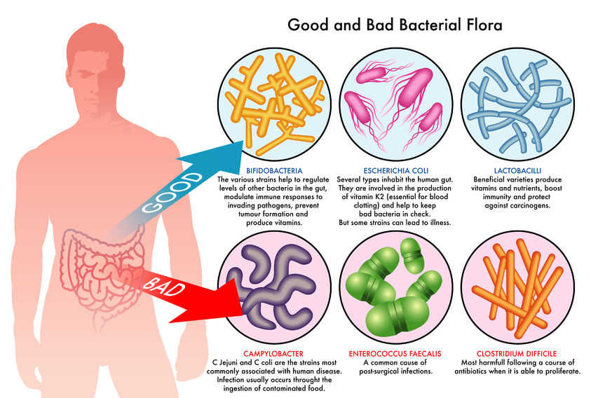 probiotics good vs bad
