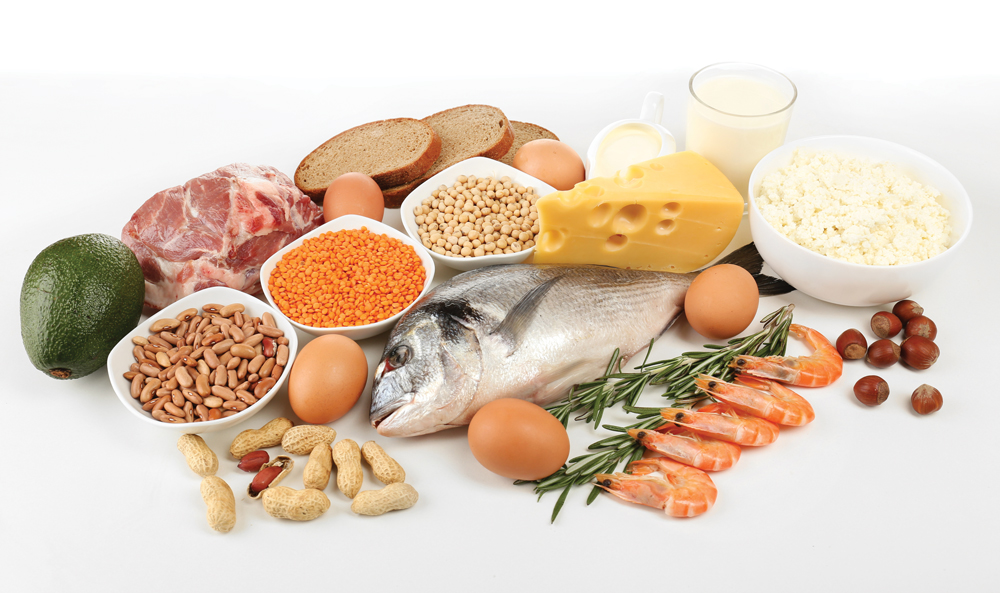 fat burning foods protein