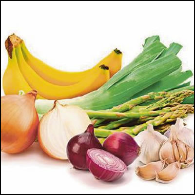 fat burning foods prebiotics