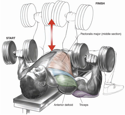 Chest exercises dumbbells