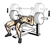 chest exercise bench