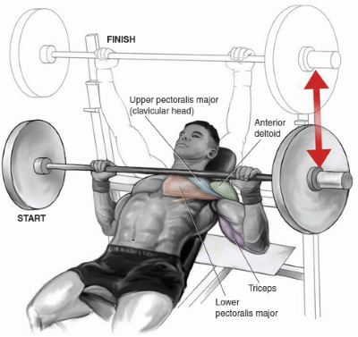 chest exercises incline