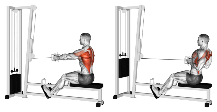 back exercise rows