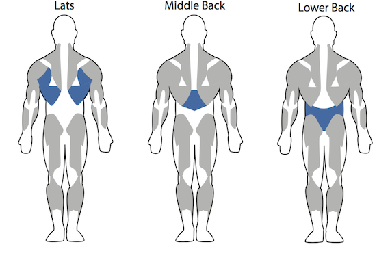 back workout muscle