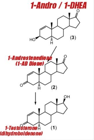 pro hormones 1-andro