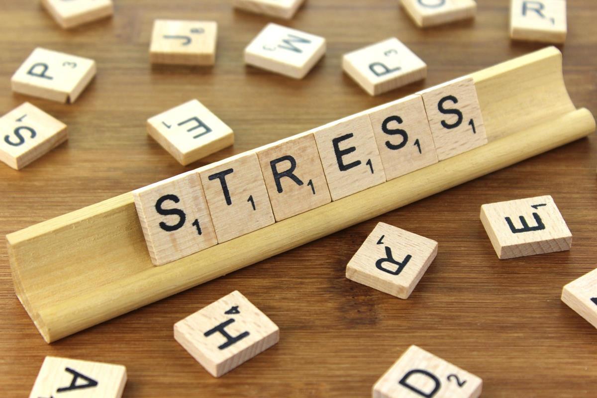 brain functions focus stress