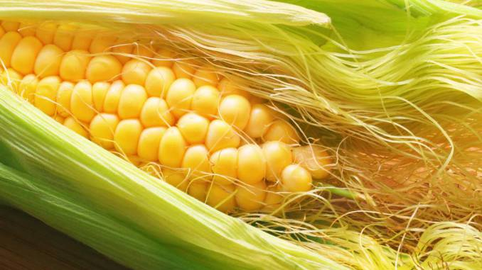 Diuretics Corn Silk