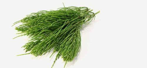 Diuretics Horsetail extract