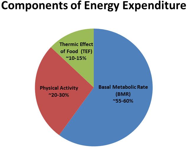 lipodrene with ephedra energy expenditure