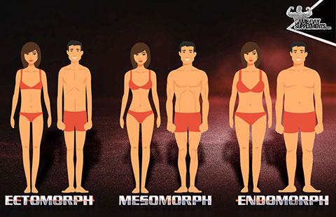 mesomorph body types